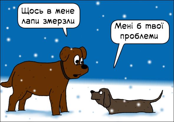 Собаки на морозі