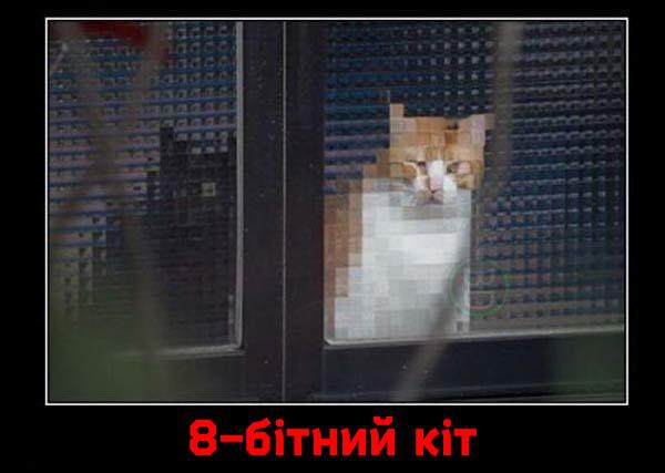 8-бітний кіт