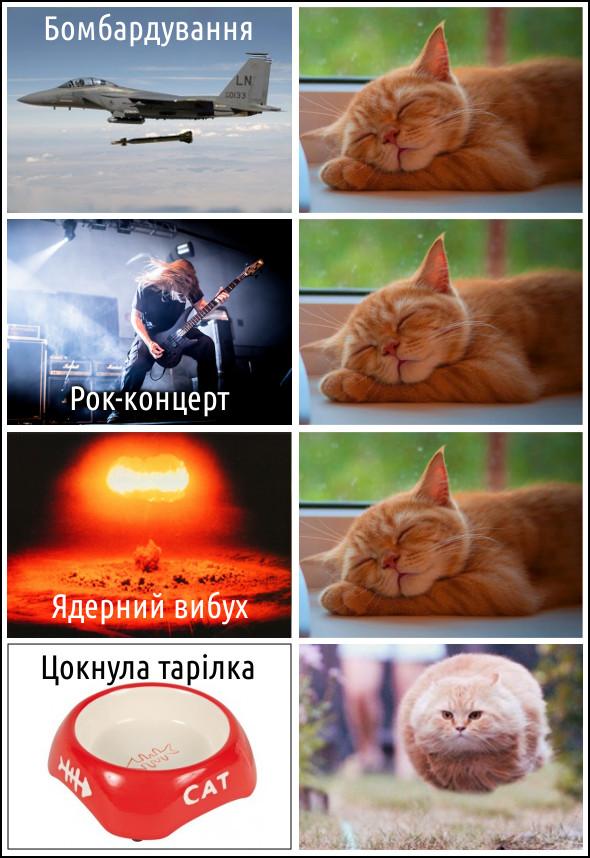 Кіт спить. Бомбардування, рок-концерт, ядерний вибух. Цокнула тарілка - кіт біжить. Гумор, прикол, тварини