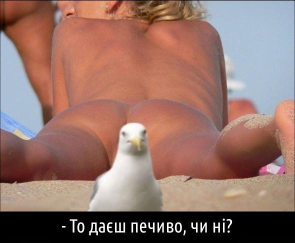 Шантаж. На пляжі лежить гола жінка, а ти не можеш роздивитись її - чайка затуляє краєвид. Чайка: - То даєш печиво, чи ні?