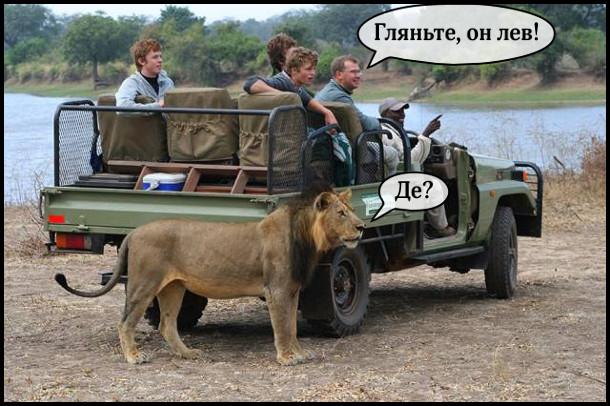 На сафарі туристи з провідником на джипові. Провідник (показуючи кцудись вдалину): - Гляньте, он лев. Лев (що стоїть коло джипа): - Де?