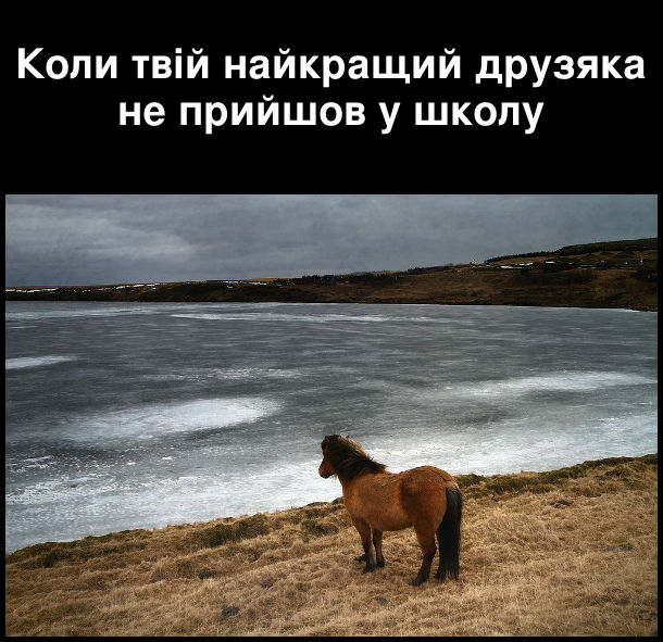 Коли твій найкращий друзяка не прийшов у школу. На фото: сумний кінь дивиться в море