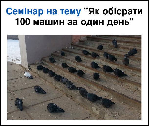 Гумор про голубів