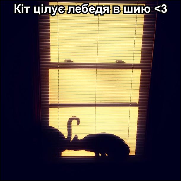 Кіт нюхає гузно іншого кота, але виглядає ніби цілує лебедя в шию