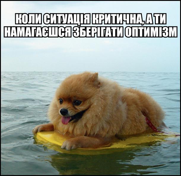 Мем Коли ситуація критична, а ти намагаєшся зберігати оптимізм. (Пес в морі на дошці для серфінгу)