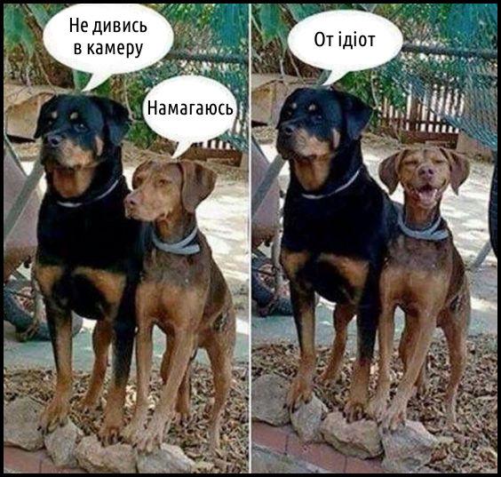 Кумедне фото з собаками