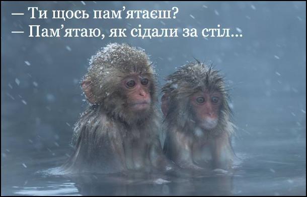 Прикол. Після вчорашнього. Сидять дві мавпи в воді. - Ти щось пам'ятаєш? - Пам'ятаю, як сідали за стіл...