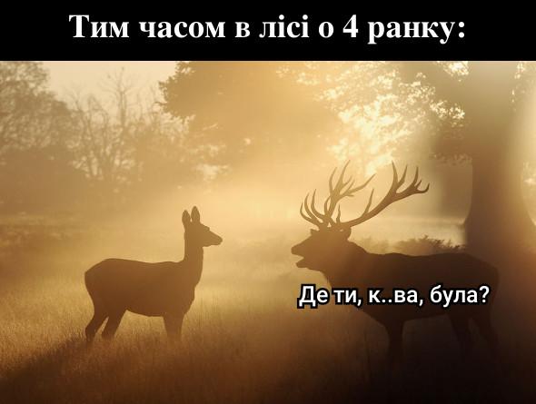 Тим часом в лісі о 4 ранку. Олень до оленихи: - Де ти, курва, була?