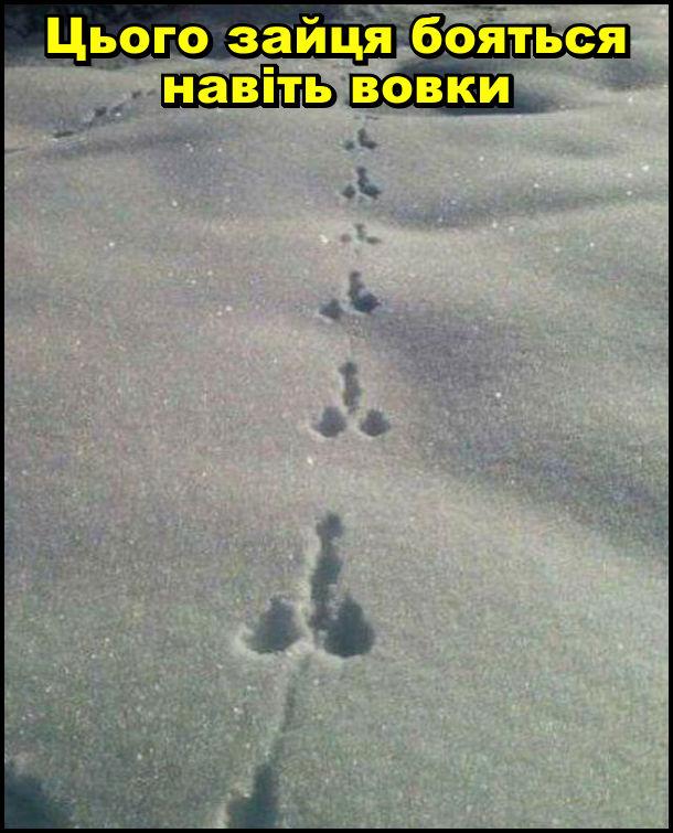 Цього зайця бояться навіть вовки. Він залишає дивні сліди