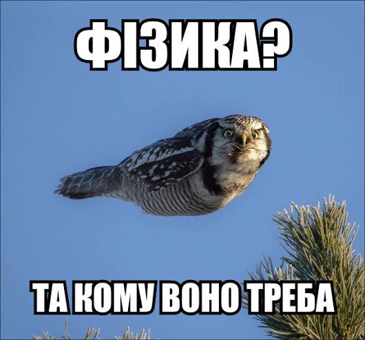 Летить сова не розмахуючи крилами. Фізика? Та кому воно треба!