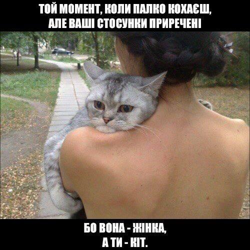 Той момент, коли палко кохаєш, але ваші стосунки приречені, бо вона - жінка, а ти - кіт
