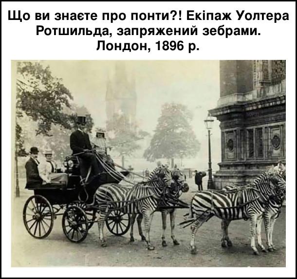 Що ви знаєте про понти?! Екіпаж Уолтера Ротшильда, запряжений зебрами. Лондон, 1896 рік
