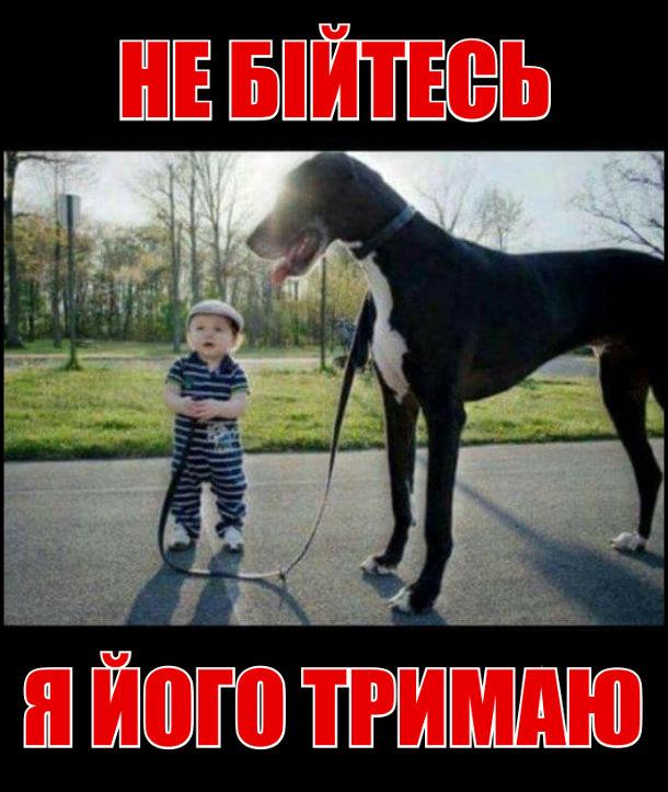 Здоровецький пес. Його тримає за повідок малюк. Не бійтесь, я його тримаю