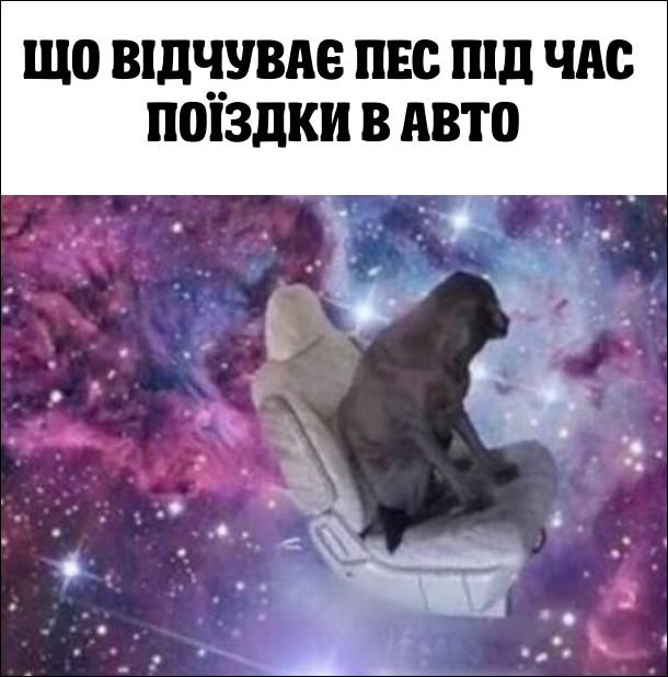 Що відчуває пес під час поїздки в авто - неначе він летить в космосі