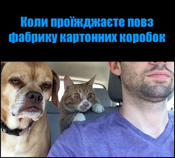Коли проїжджаєте повз фабрику картонних коробок. На фото: в авто їдуть господар, пес і кіт. Кіт дивиться, витріщивши очі