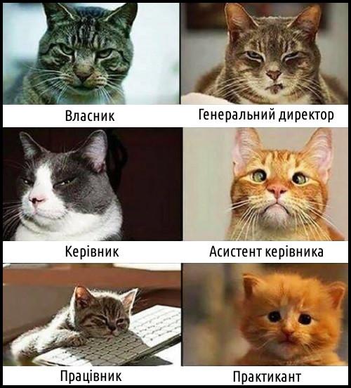 Коти: власник, генеральний директор, керівник, асистент керівника, працівник, практикант