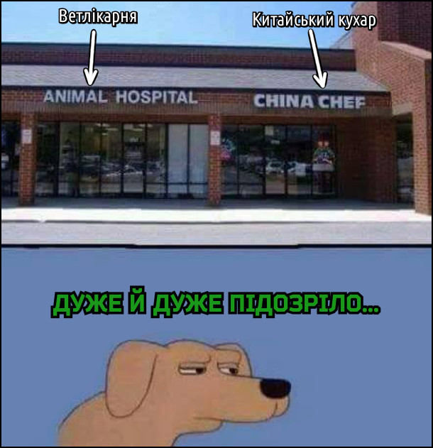 Поряд знаходиться ветеринарна лікарня і китайський ресторан. Пес дивиться на це: - Дуже й дуже підозріло...
