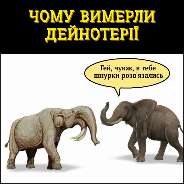 Чому вимерли дейнотерії. Йде дейнотерій (динотерій)я. назустріч слон: - Гей, чувак, в тебе шнурки розв'язались (В дейнотеріїв бивні загнуті донизу)