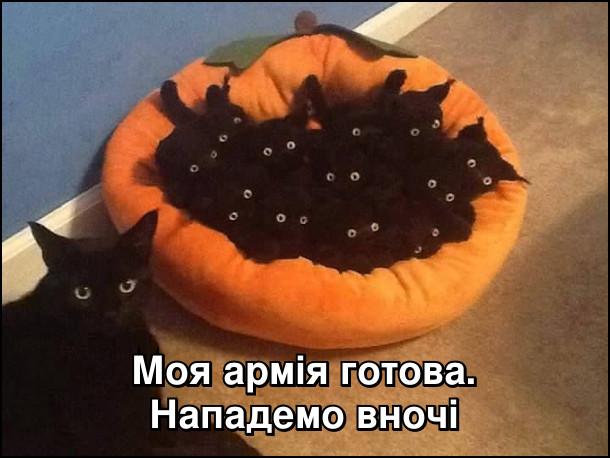Моя армія готова. Нападемо вночі. На фото: чорна кицька і її чорні кошенята