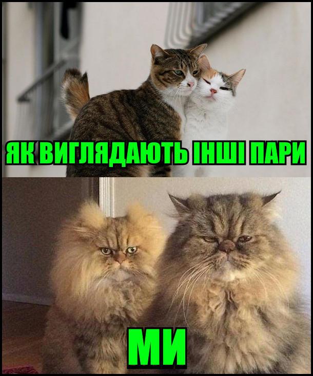 Як виглядають інші пари і яки виглядаємо ми. На фото: кумедна пара котів
