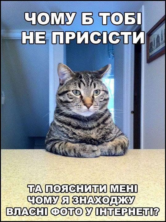 Мем Кіт хоче поговорити. Кіт: - Чому б тобі не присісти та пояснити мені чому я знаходжу власні фото в інтернеті?