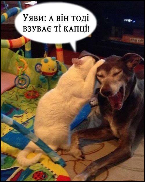 Кіт до собаки: - Уяви: а він тоді взуває ті капці! Собака сміється