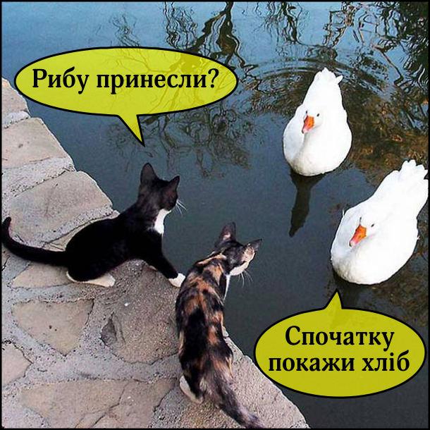 Два коти на березі, до низ підпливають два лебеді. - Рибу принесли? - Спочатку покажи хліб