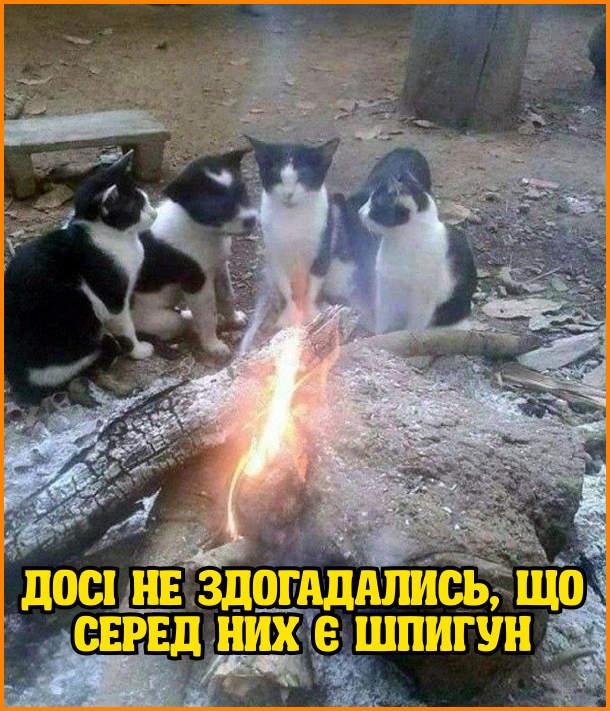 Досі не здогадались, що серед них є шпигун. Біля вогнища сидять троє кошенят і один цуценя - всі однакової масті