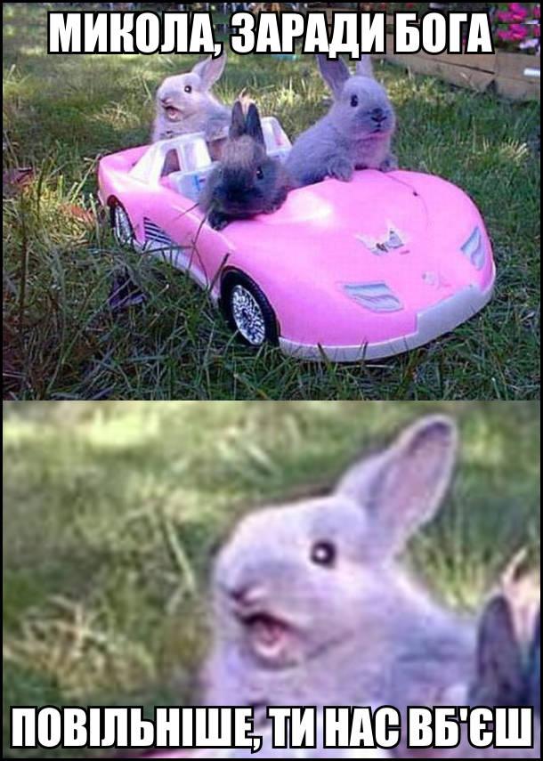 Микола, заради Бога помаліше, ти нас вб'єш! На фото: Три кролики в іграшковому автомобілі