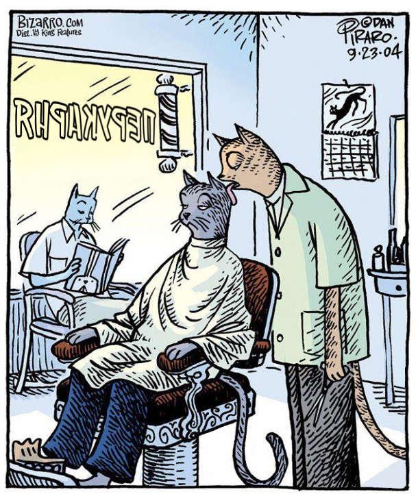 Перукарня для котів. Кіт-перукар облизує кота-клієнта