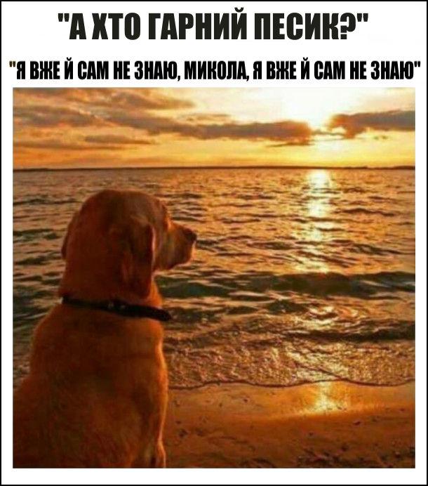 - А хто гарний песик? - Я вже й сам не знаю, Микола, я вже й сам не знаю. На фото: пес на березі моря меланхолійно дивиться на захід сонця