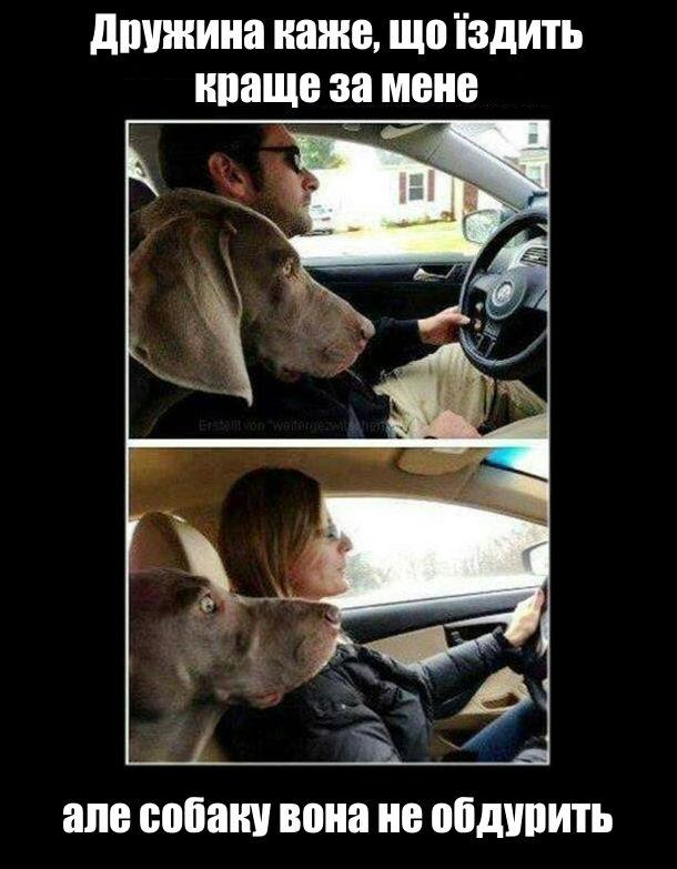 Дружина каже, що їздить краще за мене, але собаку вона не обдурить