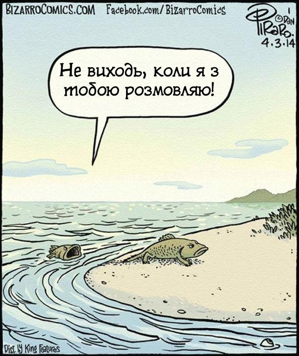 В еволюції були свої причини. Полаялись риби - чоловік і дружина. Чоловік розсердився і виповз на берег. Дружина: - Не виходь, коли я з тобою розмовляю!
