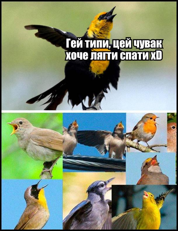 Птах: Гей типи, цей чувак хоче лягти спати xD. Інші птахи почали цвірінькати