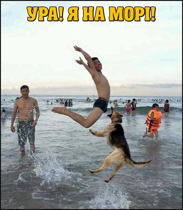 Ура! Я на морі! - вигукнув хлопчик пляжі і радісно підцибнув. Вівчарка також підцибнула і націлилась цапнути його за яйця