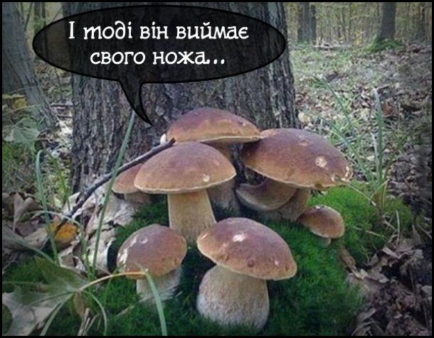 Зібрались гриби і розповідали страшні історії: - І тоді він виймає свого ножа...