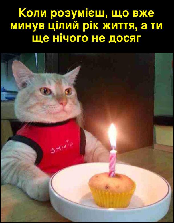 Коли розумієш, що вже минув цілий рік життя, а ти ще нічого не досяг. На фото: кіт сидить перед тортиком (кексом) і однією запаленою свічкою