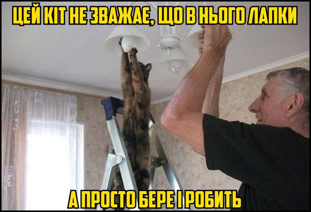 Цей кіт не зважає, що в нього лапки, а просто бере і робить. На фото: кіт вкручує лампочку