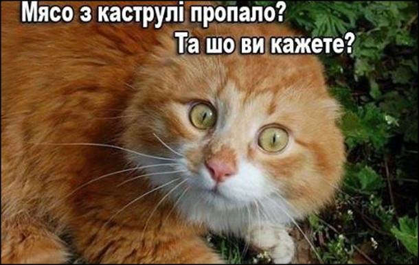 Кіт: - М'ясо з каструлі пропало? Та шо ви кажете?