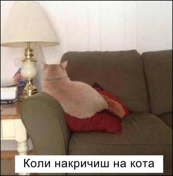 Коли накричиш на кота. Кіт сидить на канапі спиною до тебе