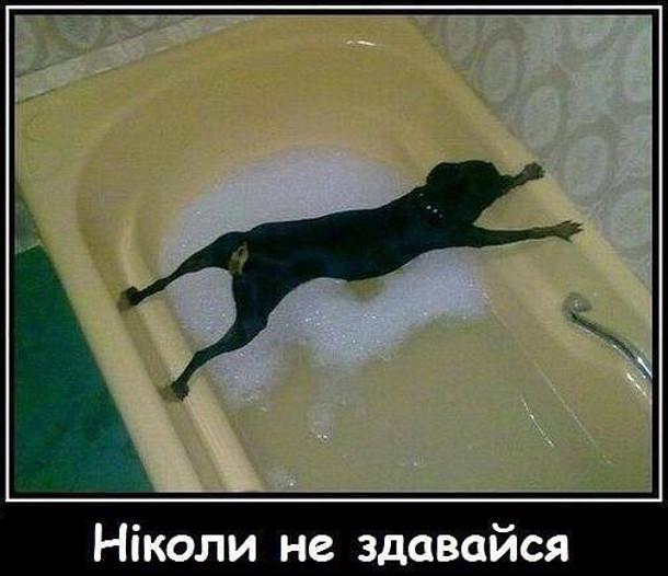 Ніколи не здавайся. На фото: пес не хоче купатися і розкарячився над ванною