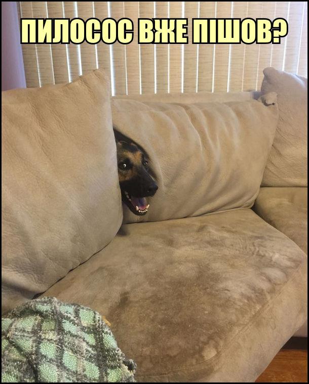 Собака сховався в дивані за подушками. Висунув морду: - Пилосос вже пішов?