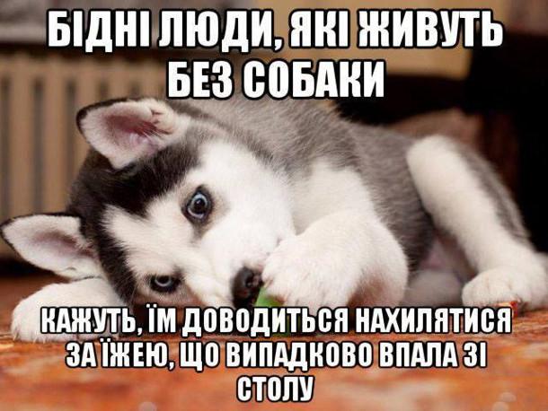 Бідні люди, що живуть без собаки. Кажуть, їм доводиться нахилятися за їжею, що випадково впала зі столу