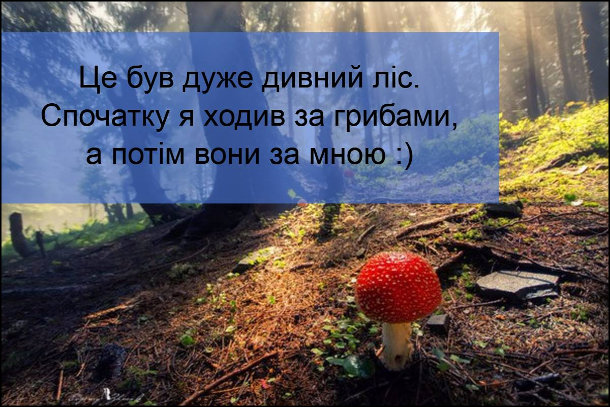 Це був дуже дивний ліс. Спочатку я ходив за грибами, а потім вони за мною :)