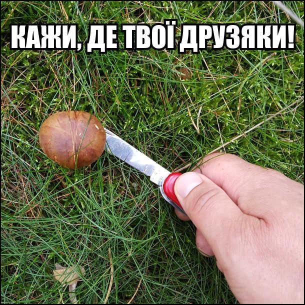 Як шукати гриби. Знаходиш одного гриба, прикладаєш до нього ножа і погрозливо кажеш: - Кажи, де твої друзяки!