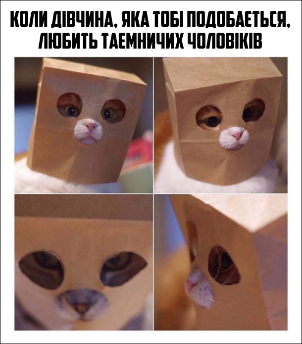 Коли дівчина, яка тобі подобається, любить таємничих чоловіків. Кіт в якого на голові надітий паперовий пакет з отворами для очей і носа