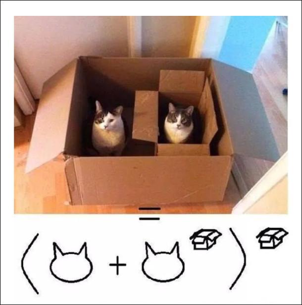 Двоє котів в коробці, один з них  в маленькій коробці. Кіт плюс кіт в степені коробка в дужках і в степені коробка. Котоматика