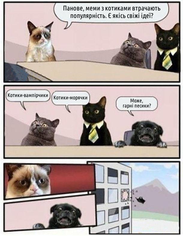 Сердитий кіт: - Панове, меми з котиками втрачають популярність. Є якісь свіжі ідеї? - Котики-вампірчики. - Котики морячки. Собака: - Може, гарні песики? Собаку викидають з вікна