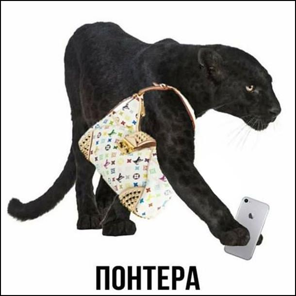 Понтера - пантера з дорогою сумочкою і iPhone в лапі. Від слова понти