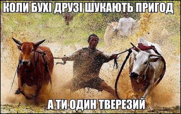 Коли бухі друзі шукають пригод, а ти один тверезий. На фото: чоловік їде на двох буйволах